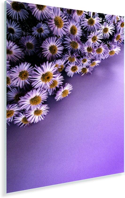 Paarse aster bloemen in de hoek Plexiglas 40x60 cm - Foto print op Glas (Plexiglas wanddecoratie)