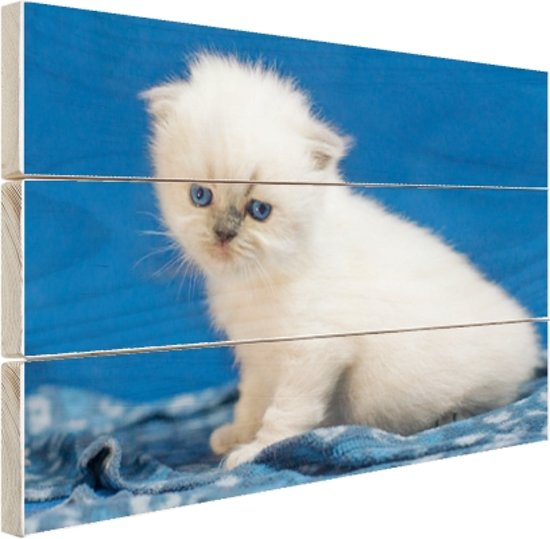 Witte kitten in blauwe ruimte Hout 60x40 cm - Foto print op Hout (Wanddecoratie)