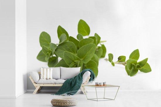 Fotobehang vinyl - Close up van de bladeren van de aromatische oregano bladeren breedte 360 cm x hoogte 240 cm - Foto print op behang (in 7 formaten beschikbaar)