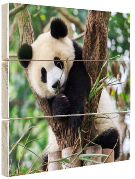 Panda welp Hout 30x20 cm - Foto print op Hout (Wanddecoratie)