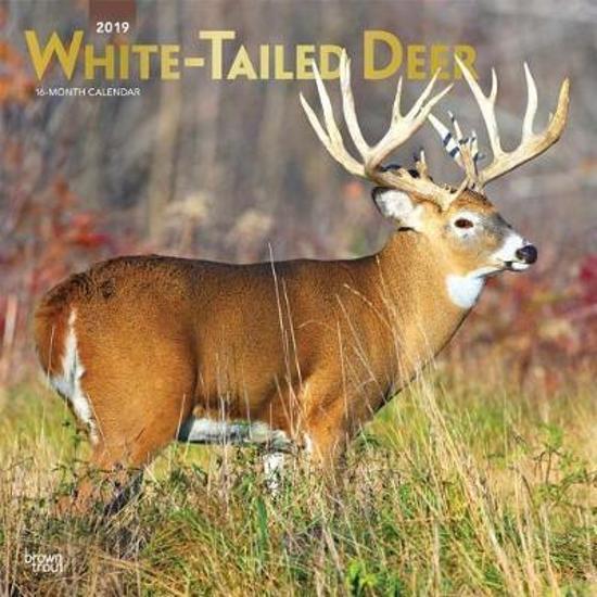 CAL 2019-WHITE TAILED DEER SQU