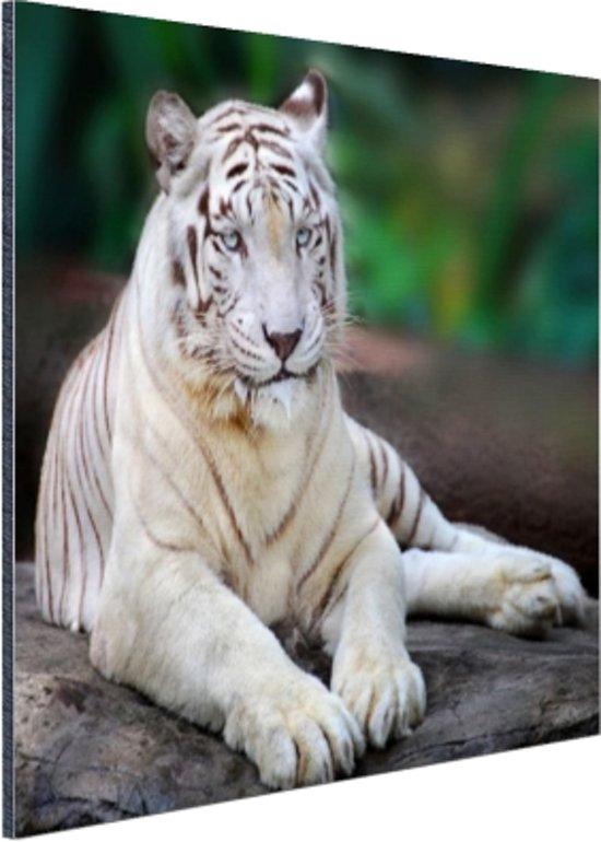 Witte tijger Aluminium 120x80 cm - Foto print op Aluminium (metaal wanddecoratie)