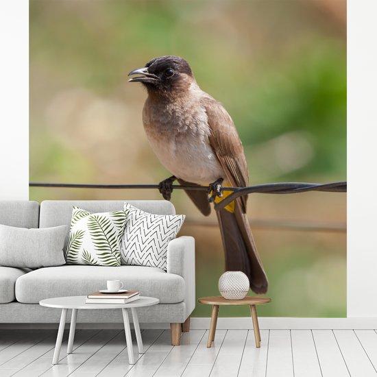 Fotobehang vinyl - Close-up van nachtegaal op draad breedte 450 cm x hoogte 450 cm - Foto print op behang (in 7 formaten beschikbaar)