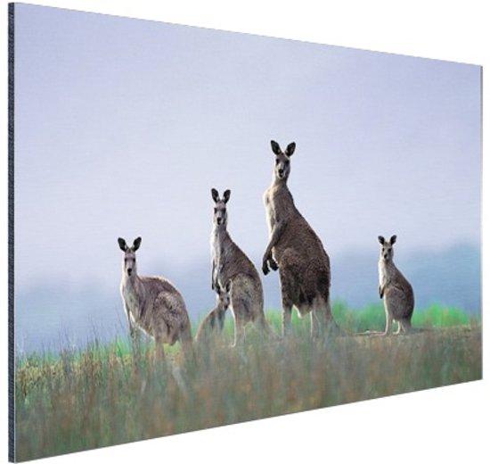 Kangoeroefamilie Aluminium 120x80 cm - Foto print op Aluminium (metaal wanddecoratie)
