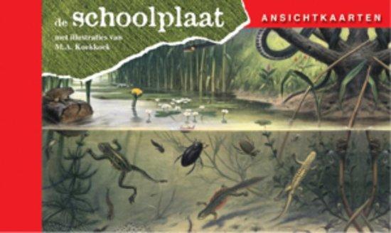 Ansichtkaarten, de Schoolplaat In Ons Land