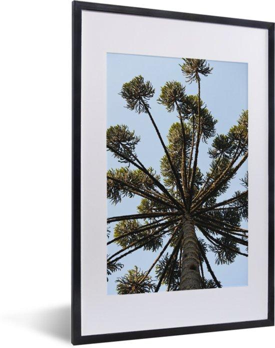 Foto in lijst - Parana pine takken tegen lichtblauwe lucht fotolijst zwart met witte passe-partout 40x60 cm - Poster in lijst (Wanddecoratie woonkamer / slaapkamer)