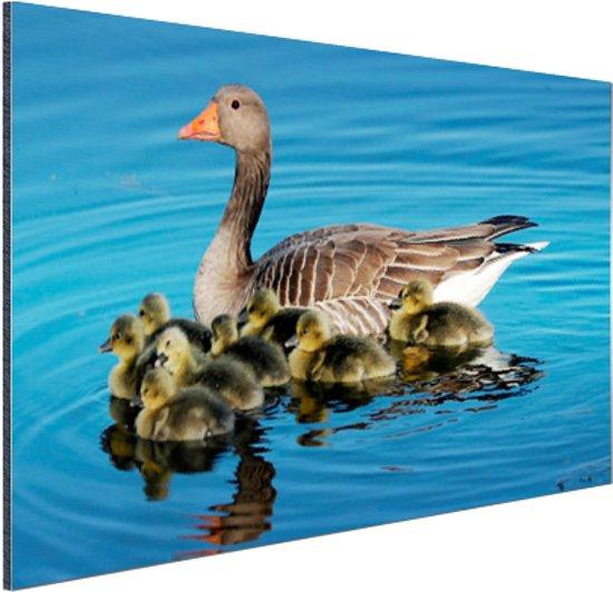 Gans met babyganzen in het water Aluminium 180x120 cm - Foto print op Aluminium (metaal wanddecoratie) XXL / Groot formaat!