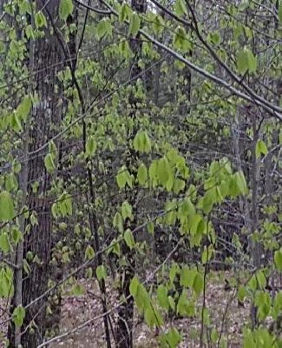 School Composition Book Spring Forest Trees New Leaves