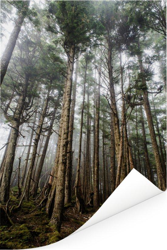 De bossen van het Canadese archipel Haida Gwaii in Brits-Columbia Poster 80x120 cm - Foto print op Poster (wanddecoratie woonkamer / slaapkamer)