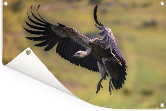 Vale gier landt in een groene omgeving Tuinposter 90x60 cm - Tuindoek / Buitencanvas / Schilderijen voor buiten (tuin decoratie)