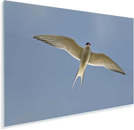 Noordse stern vliegt boven IJsland Plexiglas 60x40 cm - Foto print op Glas (Plexiglas wanddecoratie)