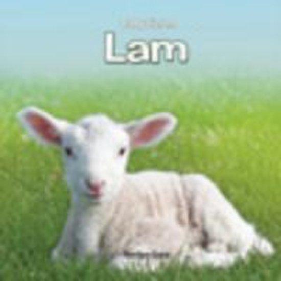 Babydieren Lam