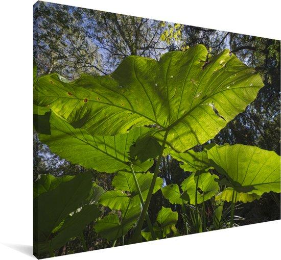 Tayer met op de achtergrond andere bladeren Canvas 30x20 cm - klein - Foto print op Canvas schilderij (Wanddecoratie woonkamer / slaapkamer)