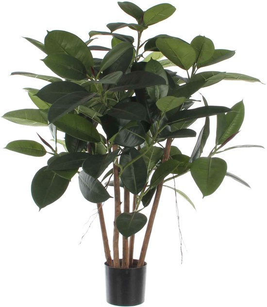 Mica flowers ficus robusta h90d70 groen in pot