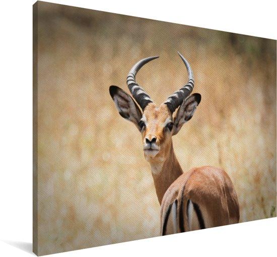 Een gazelle kijkt achterom recht in de camera Canvas 60x40 cm - Foto print op Canvas schilderij (Wanddecoratie woonkamer / slaapkamer) / Wilde dieren Canvas Schilderijen