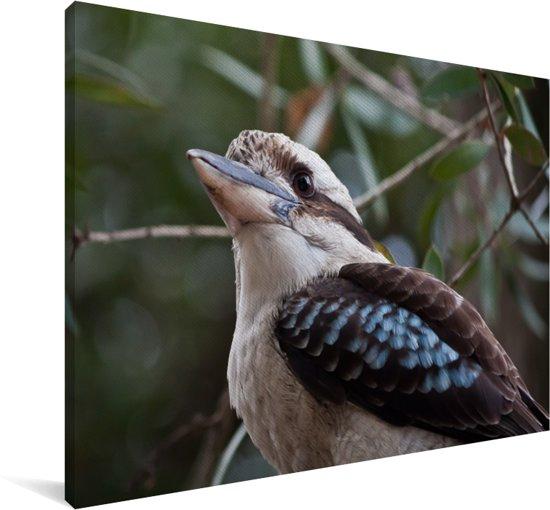 Een wit met zwarte kookaburra omringd door kleine takjes Canvas 140x90 cm - Foto print op Canvas schilderij (Wanddecoratie woonkamer / slaapkamer)