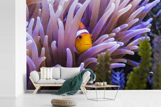 Fotobehang vinyl - Clown vis die zich in het anemoon verbergt breedte 420 cm x hoogte 280 cm - Foto print op behang (in 7 formaten beschikbaar)