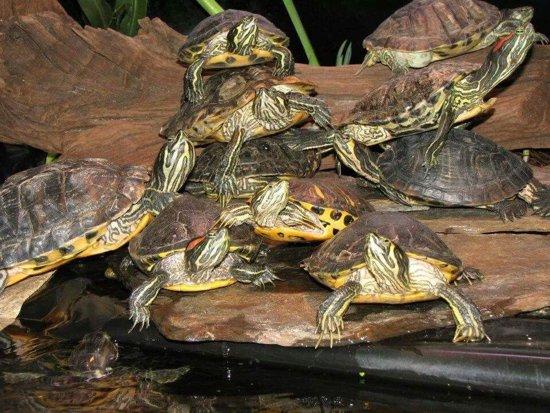Compleet voerpakket voor schildpadden