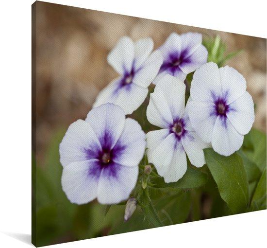 Close-up van paarse vlambloemen die in een bloembed groeien Canvas 180x120 cm - Foto print op Canvas schilderij (Wanddecoratie woonkamer / slaapkamer) XXL / Groot formaat!