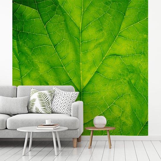 Fotobehang vinyl - Close-up van een lichtgroen spinazie blad breedte 280 cm x hoogte 280 cm - Foto print op behang (in 7 formaten beschikbaar)