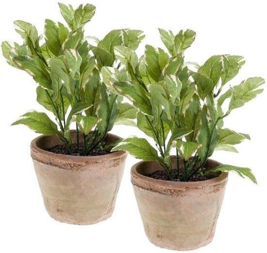 Kruiden In Pot.2x Kunstplant Laurier Kruiden Groen In Pot 25 Cm