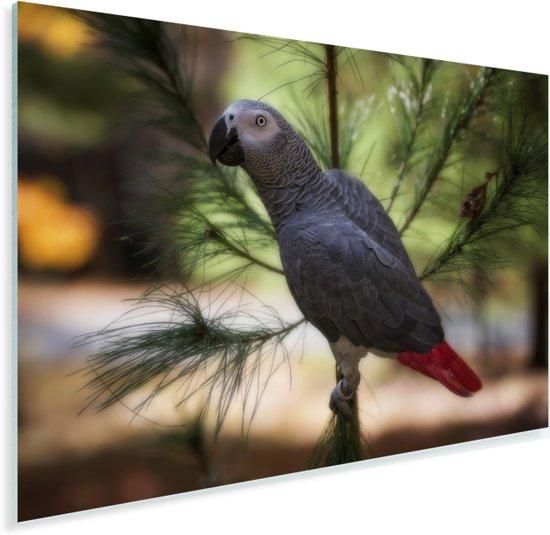 Grijze roodstaart of papegaaiachtige in de schaduw van een blad Plexiglas 60x40 cm - Foto print op Glas (Plexiglas wanddecoratie)