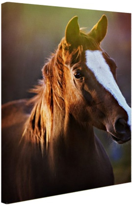 FotoCadeau.nl - Portret van paard afdruk Canvas 40x60 cm - Foto print op Canvas schilderij (Wanddecoratie)