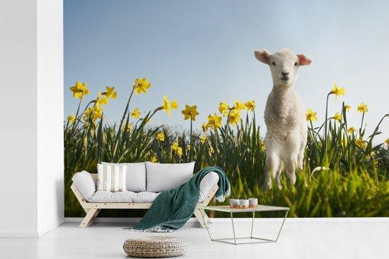 Fotobehang vinyl - Lammetje tussen de gele bloemen breedte 600 cm x hoogte 400 cm - Foto print op behang (in 7 formaten beschikbaar)