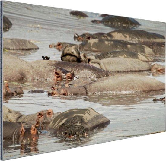 Kudde nijlpaard op een vijver Aluminium 120x80 cm - Foto print op Aluminium (metaal wanddecoratie)