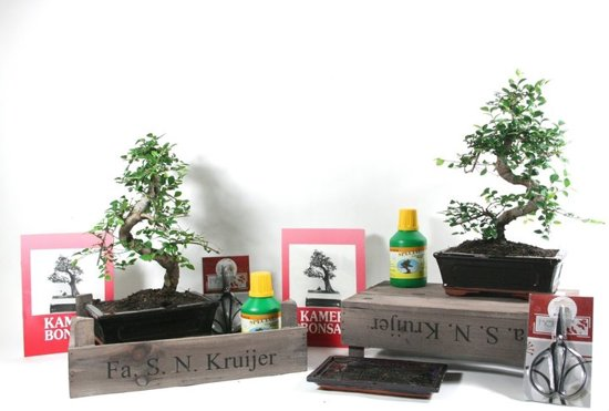 Bonsai Boom Verzorgen : Bol.com starterkit ulmus parvifolia bonsai incl. diverse