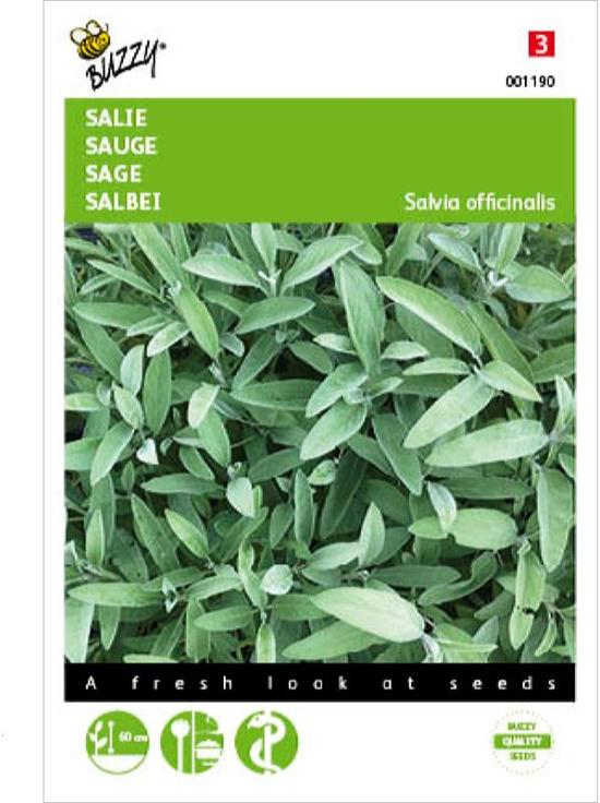 Salie - Salvia officinalis