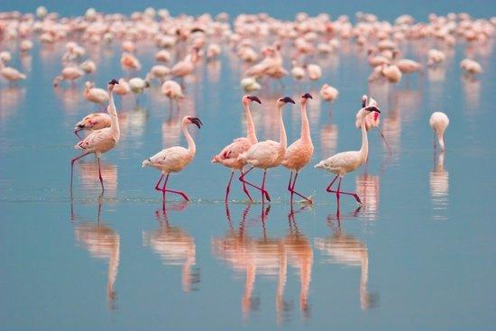 Papermoon Flamingos Vlies Fotobehang 500x280cm 10-Banen