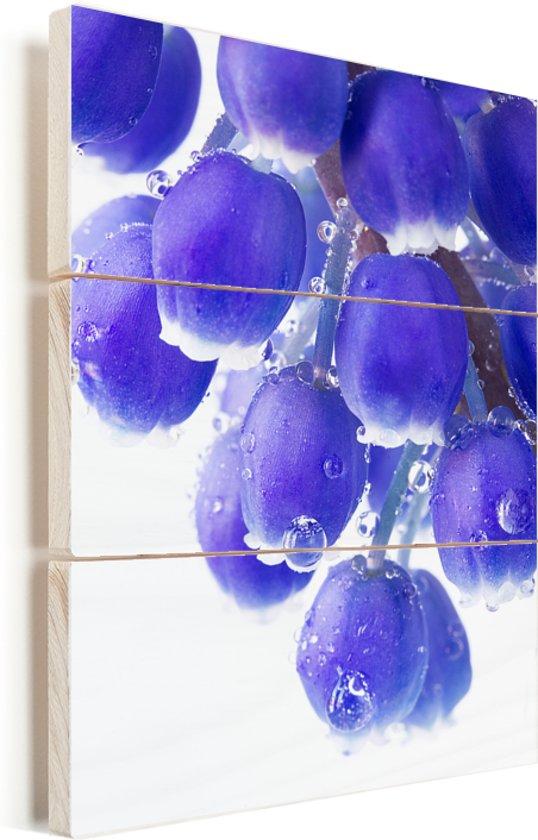 Druivenhyacint bloeit met waterdruppels op de druiven Vurenhout met planken 60x90 cm - Foto print op Hout (Wanddecoratie)