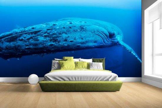 Jonge baleinwalvis onder water Fotobehang 380x265