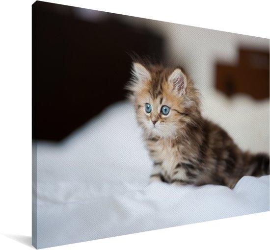 Schattige Perzische kitten Canvas 90x60 cm - Foto print op Canvas schilderij (Wanddecoratie woonkamer / slaapkamer) / Huisdieren Canvas Schilderijen