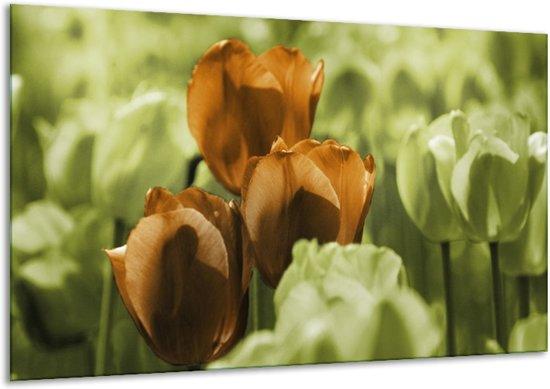 Glasschilderij Tulpen   Bruin, Groen, Zwart   120x70cm 1Luik   Foto print op Glas    F002764
