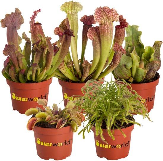 Potten Voor Planten.Bol Com Swampworld Vleesetende Planten Mix P9 5 Stuks