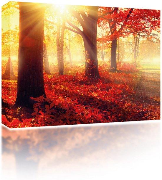 Sound Art - Canvas + Bluetooth Speaker Forest In Autumn Sun (23 x 28cm)