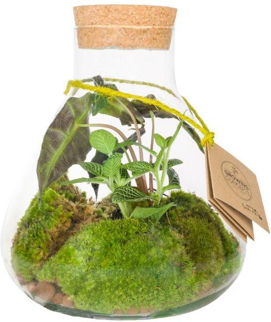Kamerplant van Botanicly – Erlenmeyer met Cork Medium - Botanic Mix – Hoogte: 23 cm