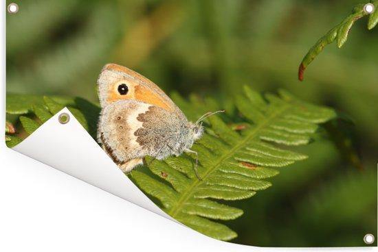 Een vlinder zit op de adelaarsvaren Tuinposter 60x40 cm - klein - Tuindoek / Buitencanvas / Schilderijen voor buiten (tuin decoratie)
