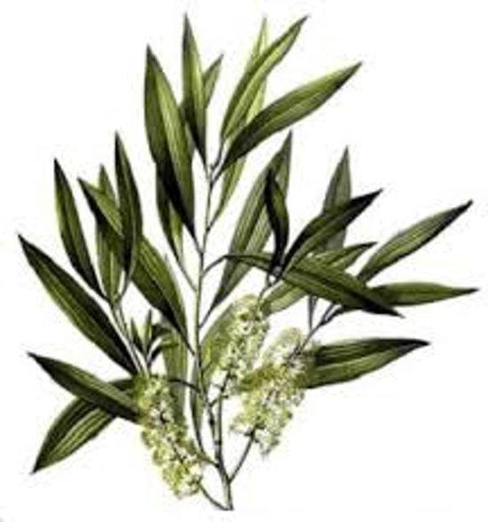 Tea Tree olie