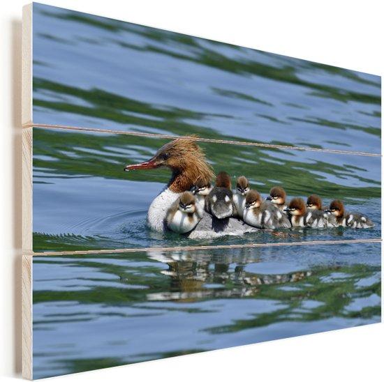 Grote zaagbek zwemt met haar kuikentjes op de rug door het water Vurenhout met planken 30x20 cm - klein - Foto print op Hout (Wanddecoratie)