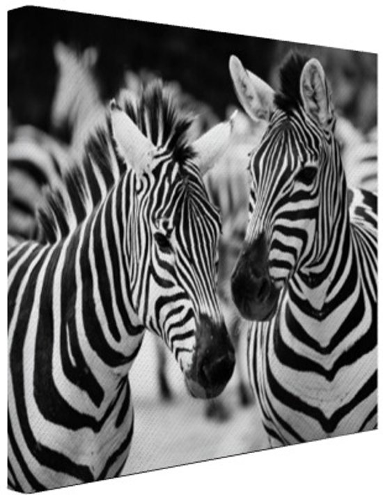 Bol zebra zwart wit canvas 80x60 cm foto print op canvas zebra zwart wit canvas 80x60 cm foto print op canvas schilderij wanddecoratie thecheapjerseys Gallery
