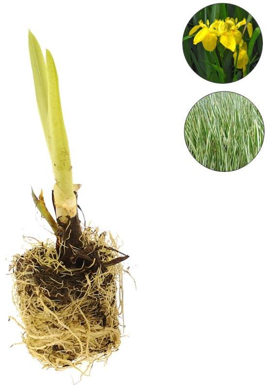 Waterworld Waterplanten Helofytenfilter - Natuurlijke Waterzuivering - Ca. 2m³ - 24 Waterplanten