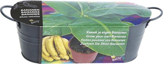 Buzzy® Teiltje Antraciet Banaan