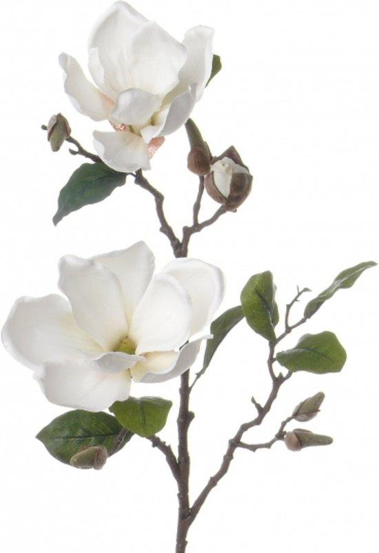 bol.com  Magnolia tak wit 72 cm