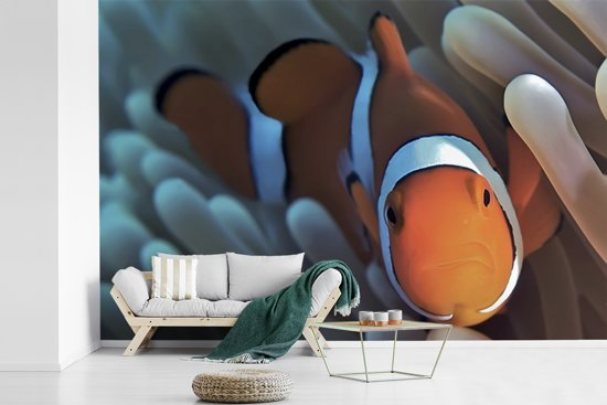 Fotobehang vinyl - Close-up beeld van een Anemoon-vis in het koraal breedte 390 cm x hoogte 260 cm - Foto print op behang (in 7 formaten beschikbaar)