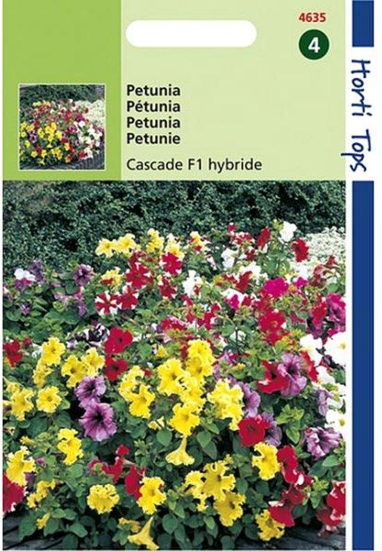 Petunia Cascade - Petunia multiflora - set van 6 stuks
