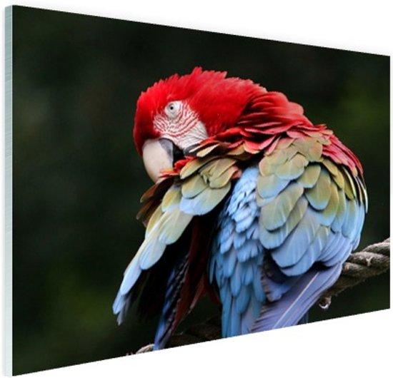 Rood en groene ara Glas 90x60 cm - Foto print op Glas (Plexiglas wanddecoratie)
