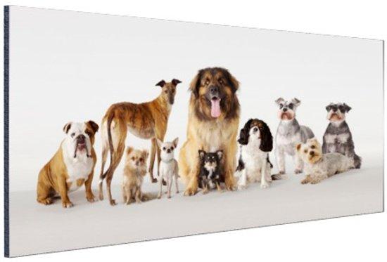 Groepsportret van honden Aluminium 90x60 cm - Foto print op Aluminium (metaal wanddecoratie)